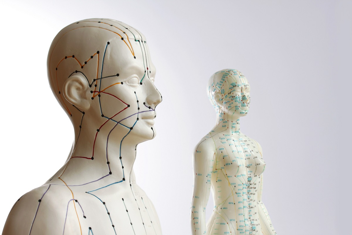 two medical dummies showing acupuncture points and meridians