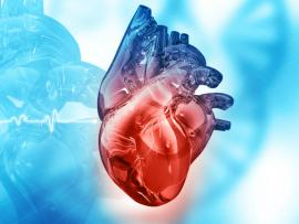three dimensional or 3D image of human heart