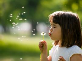Little girl blowing on a dandelion on a nice spring day.