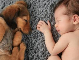 adorable dog laying next to cute newborn baby