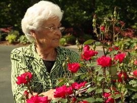 Dorothy Craig trims her rose bush in the her garden