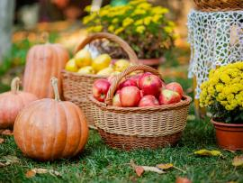 Pumpkins, baskets of apples and potted marigolds sitting on a lawn.